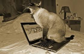 cat-on-computer-3