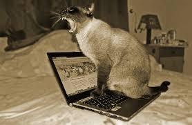 cat-on-computer-3